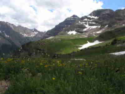 Wildflowers backdropped by North Maroon Peak