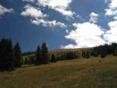 Looking up the grassy slopes of Bald Mountain