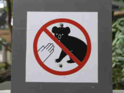 Don't touch the koalas