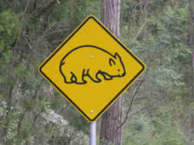 Wombat crossing sign