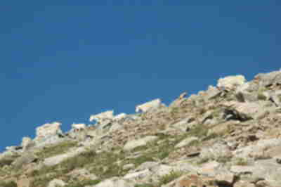 Mountain goats on the ridgeline