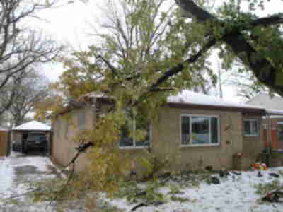 The large Y-shaped tree branch that fell on the house