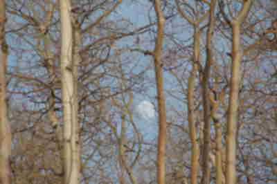 Brad's shot of the rising moon through the trees