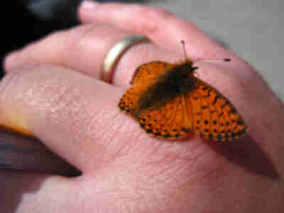 A butterfly lands on Lisa's hand