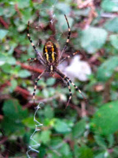Lisa snaps a photo of this creepy looking spider