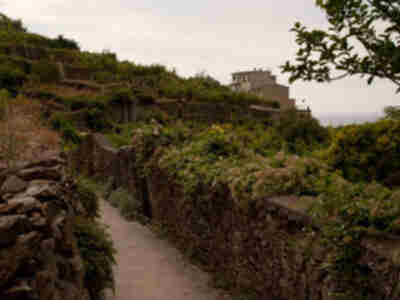 The path as it winds through the terraces in Corniglia