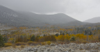Fall Color against snow in Silverthorne