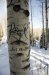 Some seriously impressive tree graffiti