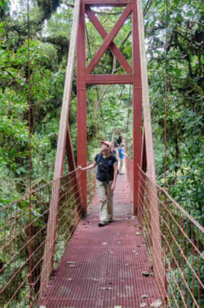 Hiking through the Monteverde Reserve