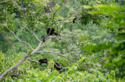 Monkeys on the side of the road