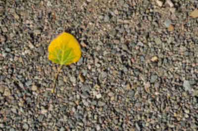 A fallen leaf in the gravel
