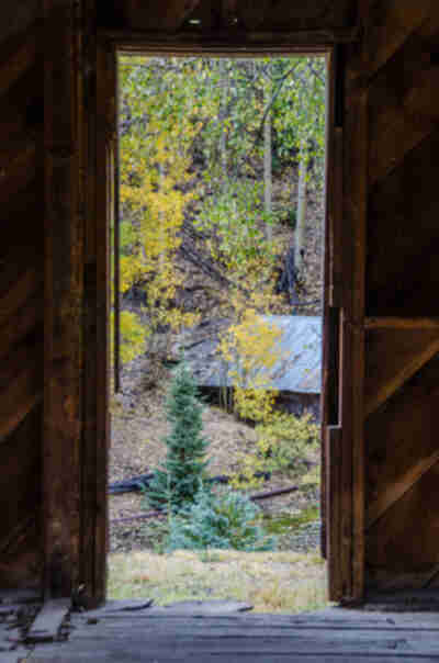Aspens from an abandoned cabin