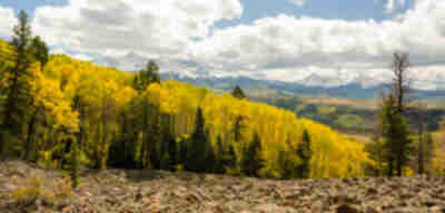 Aspens, talus, and mountains