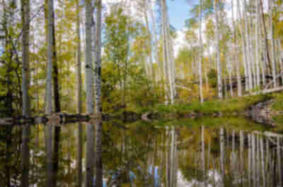 Reflections of aspens